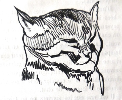 Drawing of the head of a cat