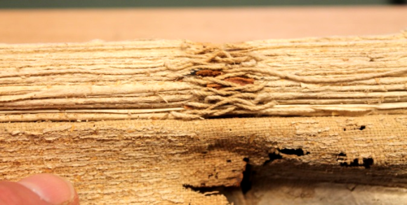 a zoomed in image of the manuscript on its spine side, showing the text block and centred on the sewing in the 'French style' the white threads interweaving. In the bottom left a finger can just be seen holding back the very tattered remnants of the spine.