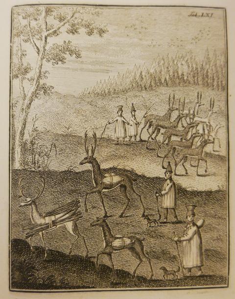 Leem Reeindeer herding
