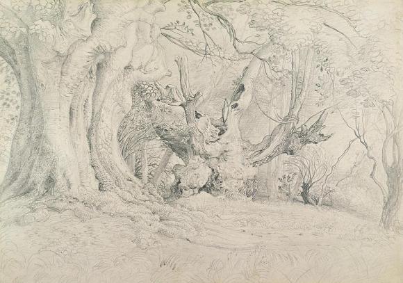 Ancient Trees, Lullingstone Park