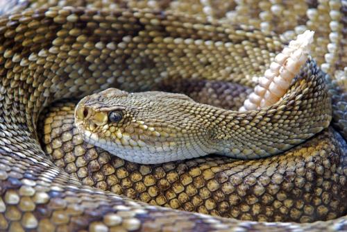 Snake-751722_1920