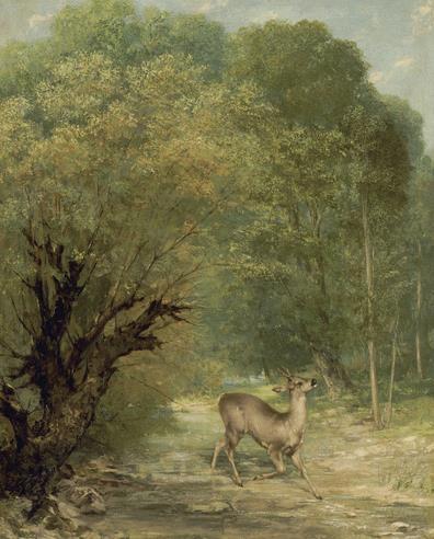 5 Hunted deer