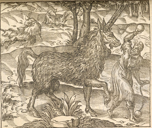 A detail from a 16th-century printed book, showing an illustration of an Italian unicorn.