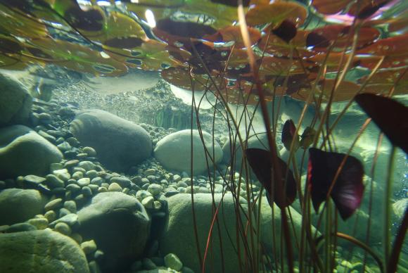 Underwater-1529206_1920