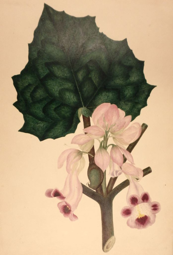 3 pale pink flowers