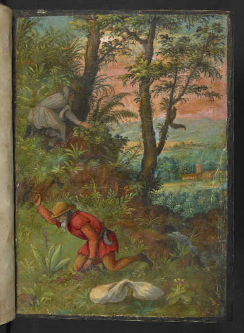 A page from a 16th-century Italian herbal, showing an illustration of a countryside, with a labourer digging for herbs.
