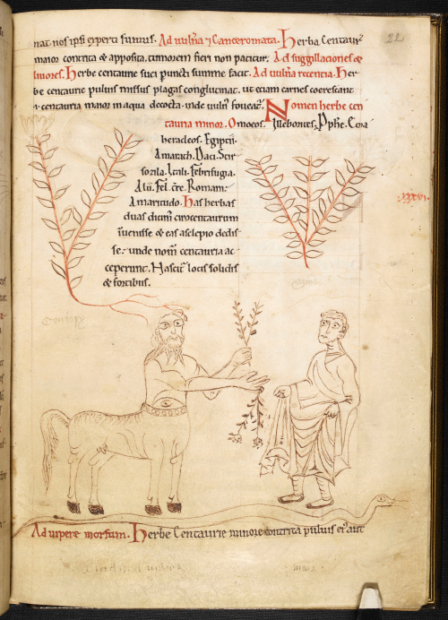 A page from a 12th-century English herbal, showing a drawing of a centaur with centaury.