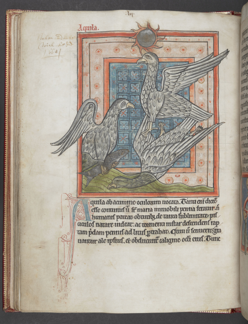 A page from a medieval bestiary, showing an illustration of an eagle.