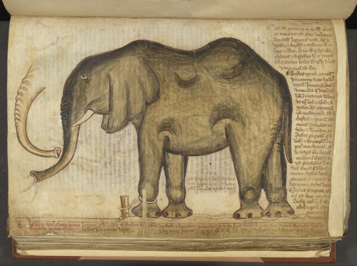 A page from a manuscript of Matthew Paris' Liber additamentorum, showing his drawing of the elephant said to have lived in the Tower of London.