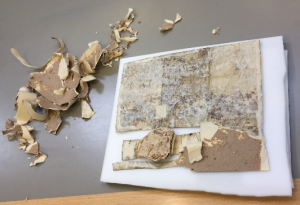 Another view of the backing board removal, this image is zoomed out a little more, showing the charter lying face down on a protective white sheet which in turn is also on a table. to the left of the parchment are scraps of backing which have been removed from the parchment.