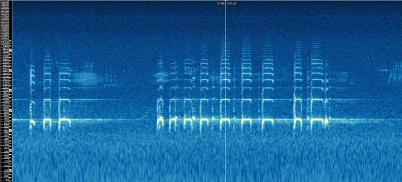 Spectrogram example (whooper swan)