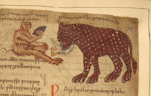 A detail from an Old English Herbal, showing an illustration of an elephant and a monkey.