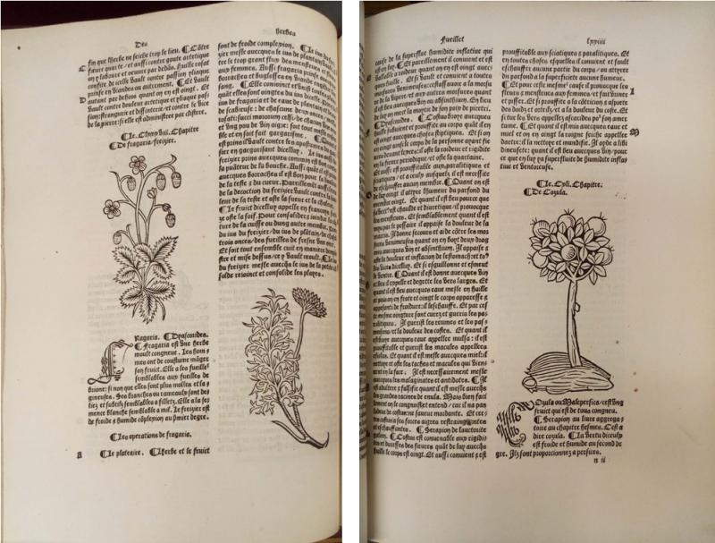 Fig 5 C.22.f.9