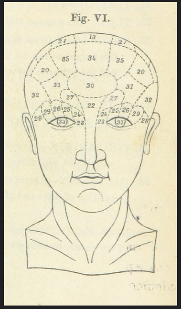 A Victorian line drawing showing a person's hairless head face-on, with the area above the eyes divided into numbered sections.