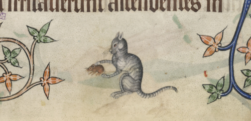 picture of a cat with a mouse from the margins of the Luttrell Psalter