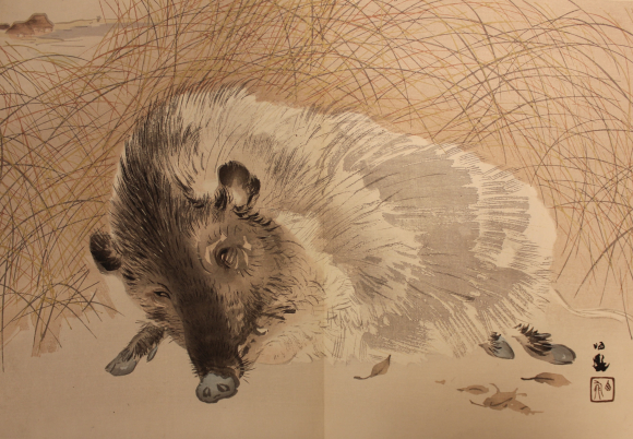 Illustration of a boar from Seihō gahakuhitsu junishi-jō by Takeuchi Seihō (c. 1900)