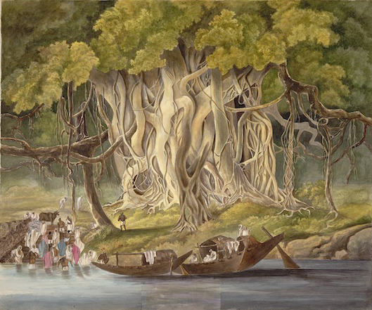 Landscape with huge banyan tree beside a river. By the 'Gilbert artist', 1822-28. BL Add.Or.2525