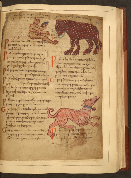 A page from an Old English Herbal, showing illustrations of a monkey, an elephant, and a dog.