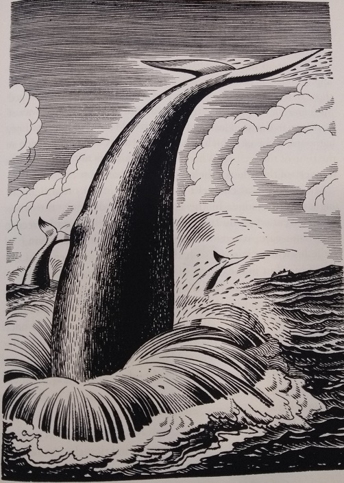 Moby dick real tale 2