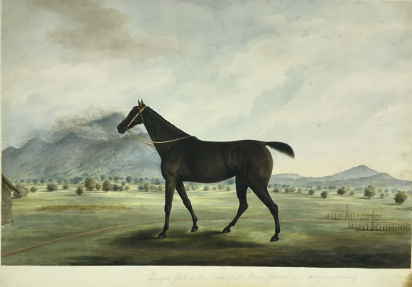 Gilbert's race-horse, 'Beggar Girl', standing on the race course at Hazaribagh. By the 'Gilbert artist', 1822-28.  BL Add.Or.3950