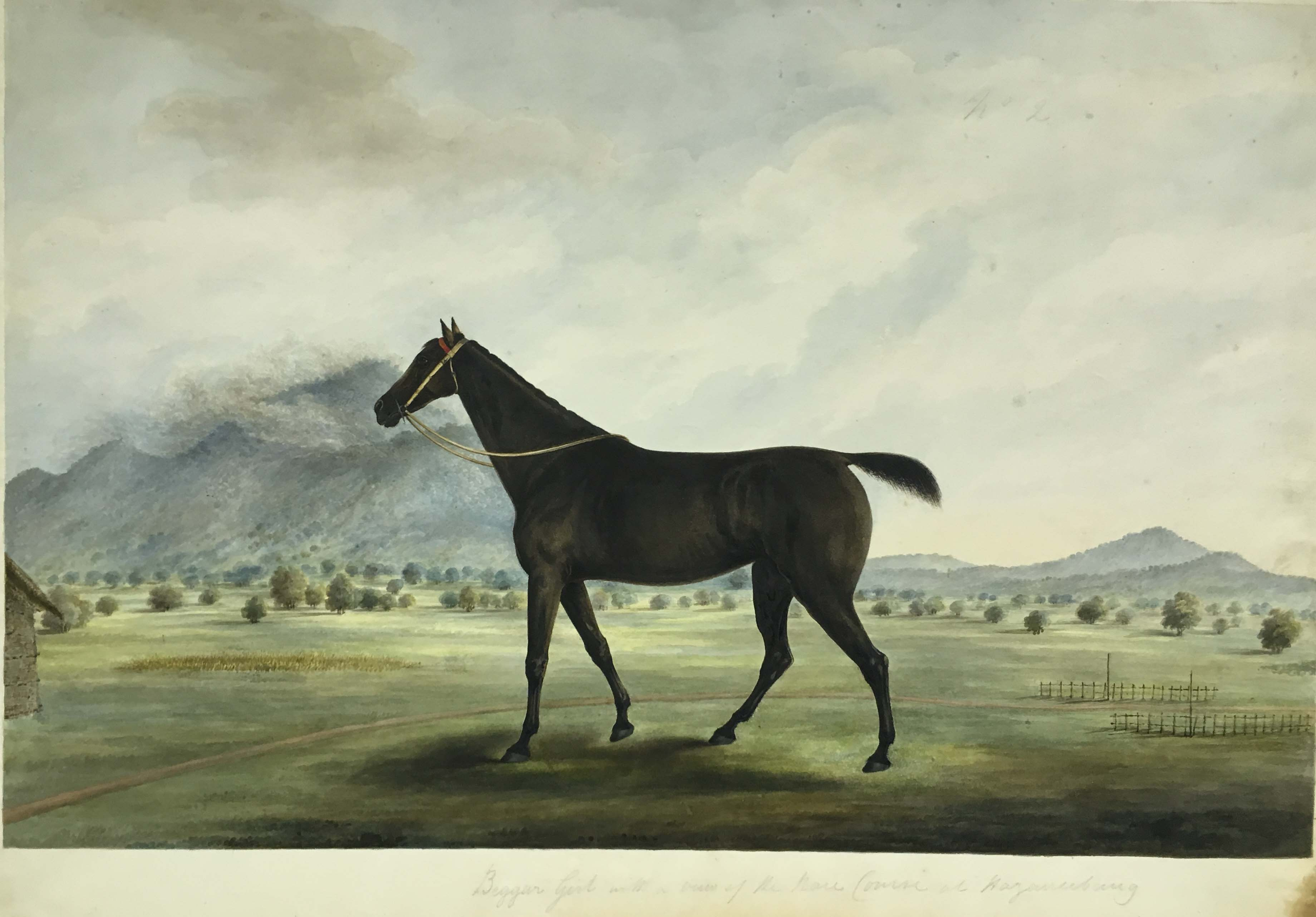 Gilbert's race-horse, 'Beggar Girl', standing on the race course at Hazaribagh. By the 'Gilbert artist', 1822-28. Credit: British Library