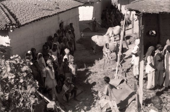 Photograph looking down at the camp, people standing in the shade of a wall with cows eating the straw on the ground