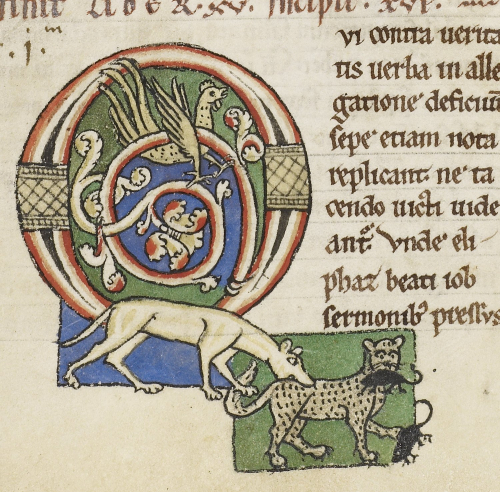 A detail from a medieval manuscript, showing an enlarged decorated initial with the figures of a dog biting a cat, catching mice in its mouth and claws.