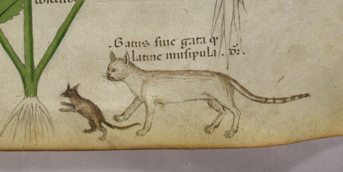 A detail from a 15th-century manuscript, showing a marginal illustration of a cat and a mouse.