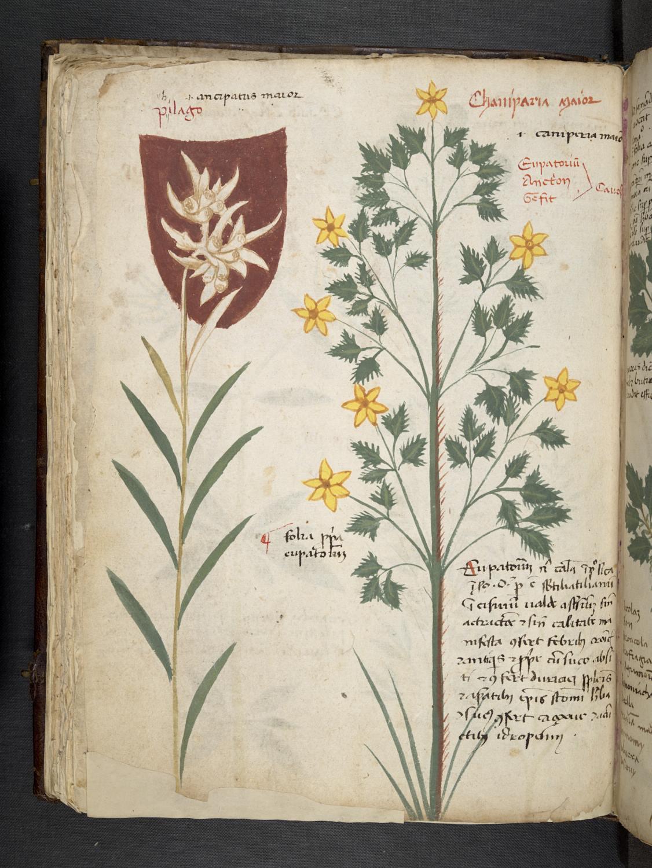 Science blog: Manuscripts