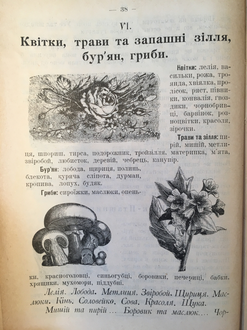 Page from Ridne slovo about plants. Featuring drawings of mushrooms and flowers