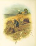 Harvest Haystack uk