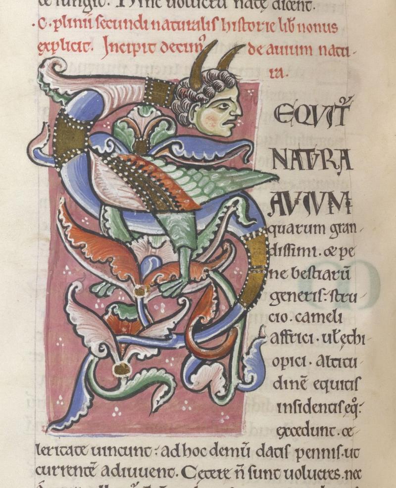 Image 5_Pliny