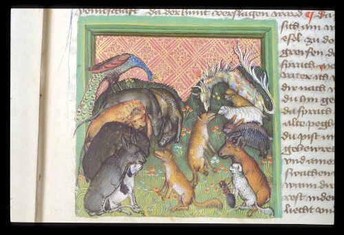 A fox and other animals, about to set off on pilgrimage