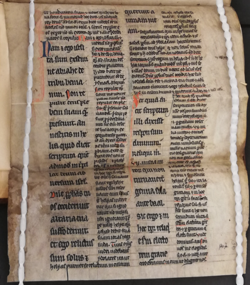 Image 7 - Glossed Bible Fragment