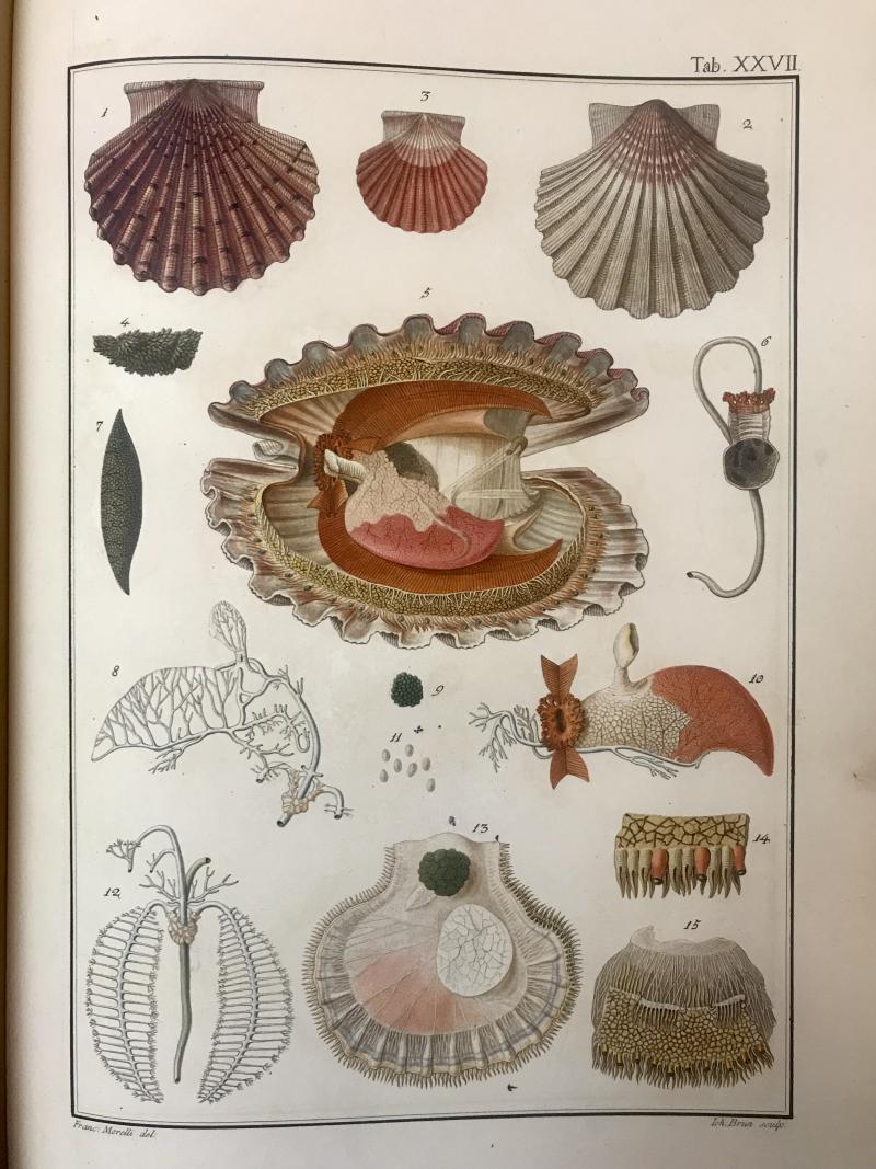 Bodoni shells