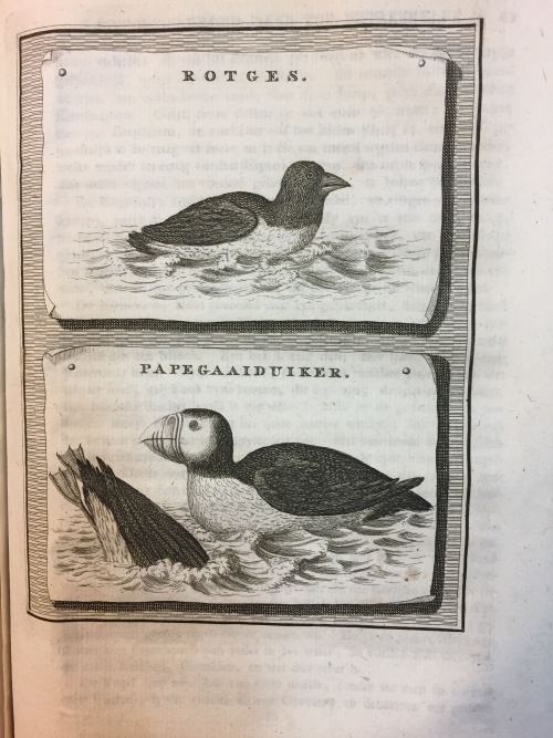 Engraving of a Brent Goose and a Puffin