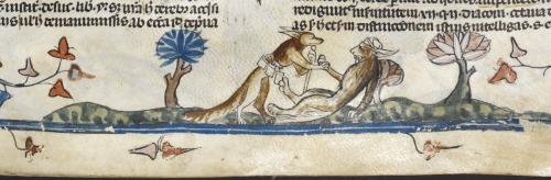 A fox feeling the lion's pulse