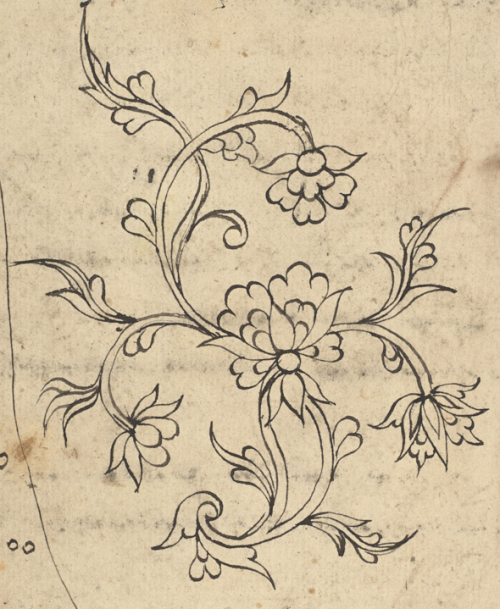 Floral sketches in a volume of Bugis treatises on diseases and medicines