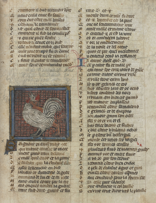 A crowing cockerel, on a page from an illuminated manuscript of the Roman de Renart