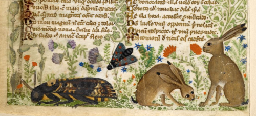 Detail from the 'Cocharelli codex', showing insects and two hares in the margin