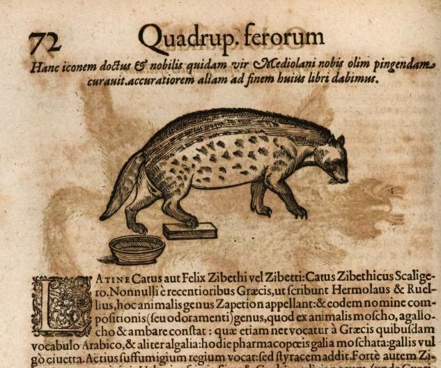 Civet Gessner 1505-137.(1.)