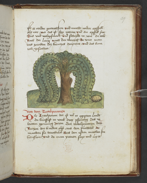 A manuscript page with a coloured drawing of a tree with leaves reaching down to the ground in the middle of the page.