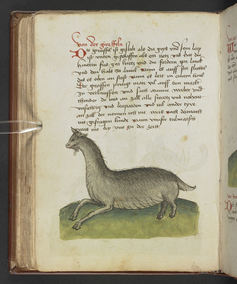 FIG 8 egerton_ms_1900_f110v giraffe