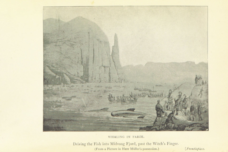 Jeaffreson Whaling in Faroes
