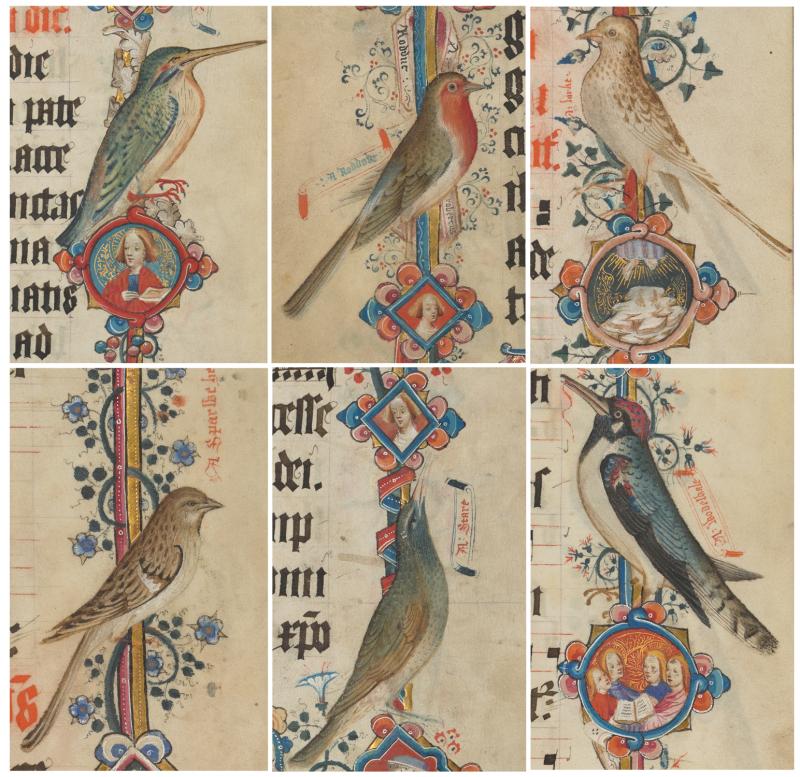 Add_ms_74236_birds-(composite)