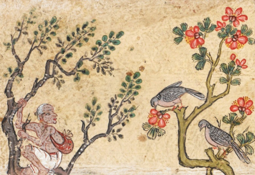 Spotted Doves (Spilopelia chinensis, นกเขาใหญ่) depicted with a greedy Brahmin, Jujaka, in an illustration from the Vessantara Jātaka. Central Thailand, 18th century. British Library, Or 14068 f.13