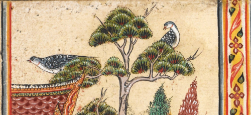 Two birds, possibly representing Burmese Collared Doves (Streptopelia decaocto xanthocycla, นกเขาแขก) in an illustration from the Suvannasāma Jātaka. Central Thailand, 18th century. British Library, Or.14068 f.5