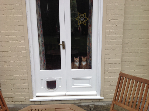 Photograph of two cats standing at doorway window