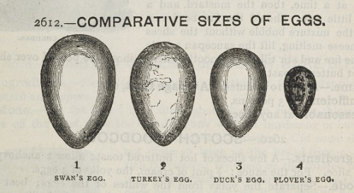 Comparative sizes of a swan's egg, turkey's egg, duck's egg, plover's egg