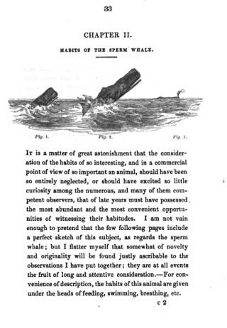 Beale Habits Sperm Whale